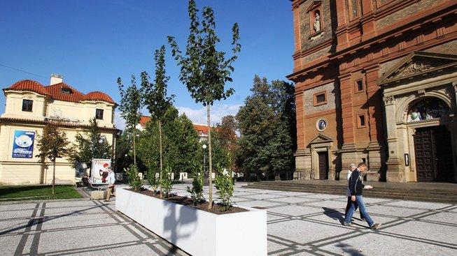 Stromy to v městech nemají jednoduché. Ilustrační snímek