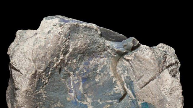 Dinosauří obratel zachovaný v opálu