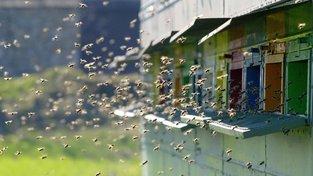 Včely opylují třetinu všech rostlin a květin na světě