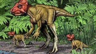 Auroraceratops rugosus