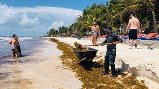 Hoteloví zaměstnanci odstraňují řasy z pláže na pobřeží Mexika u letoviska Culum