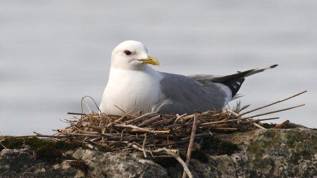 Ptačí rodiče komunikují s mláďaty, která jsou teprve ve vejcích