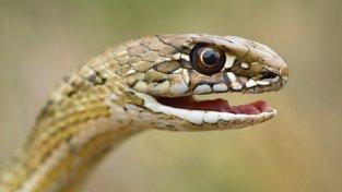 Ohrožuje hady změna klimatu?
