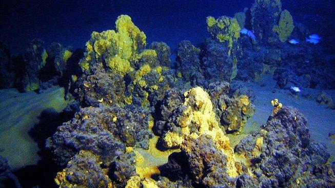 Archebakterie (archea) jsou objevovány u podmořských vulkánů