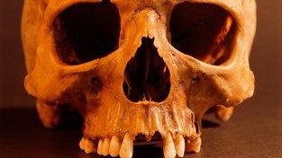 Objevy lebek v oblasti incké říše vedly k poznání, že tato civilizace dokázala být nesmírně krutá