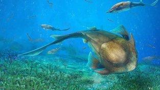 Qilinyu Rostrata – obrněná ryba, která obývala oceány před 420 miliony lety