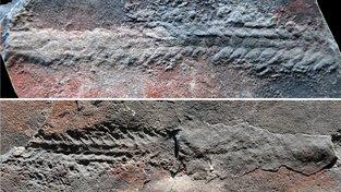 Stopy, které před 550 miliony let zanechal v hornině na jihu Číny červ Yilingia spiciformis
