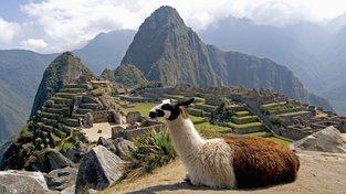 Machu Picchu, iegendami opřené incké sídlo, s lamou v popředí