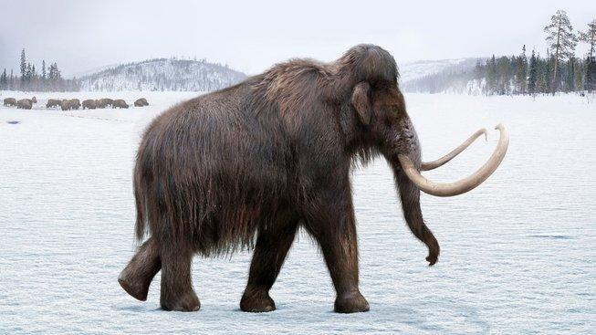 Co zabilo poslední osamělé mamuty?
