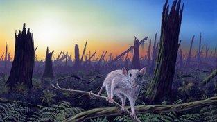 Malý savec, který přežil dopad asteroidu Chicxulub do oblasti Mexického zálivu před 66 miliony let, hledá potravu ve zdevastované krajině