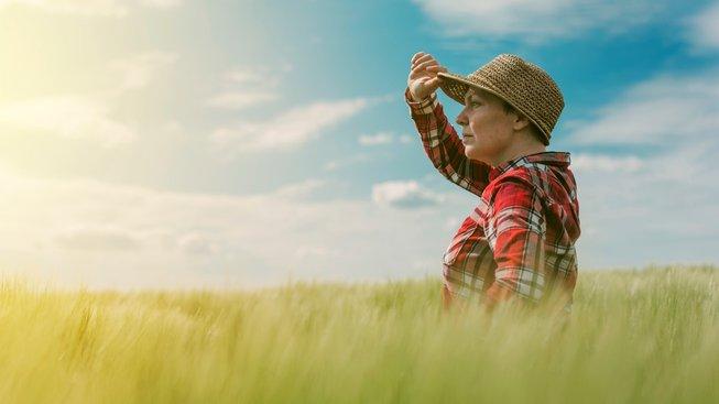 Majitelka biofarmy v Anglii hledí na své pole s pšenicí