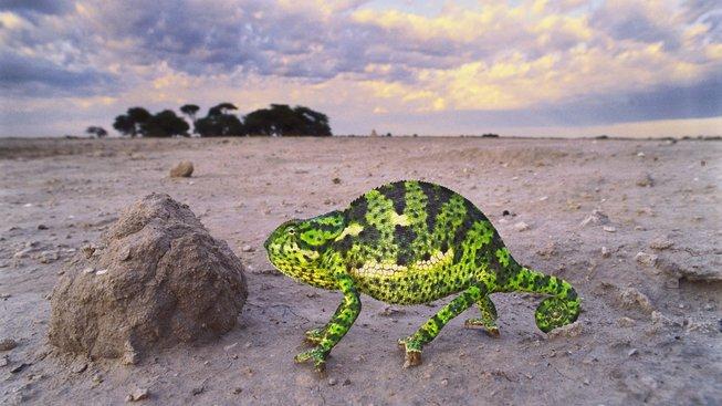 Vyprahlá oblast na místě výskytu prvních lidí je dnes rájem chameleonů