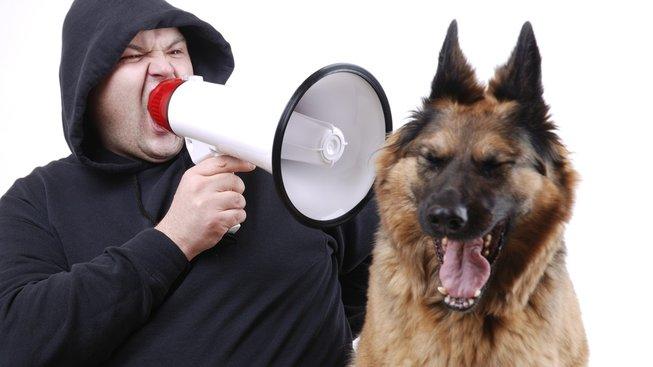 Nekřičte na svého psa! Poškozujete jeho psychiku
