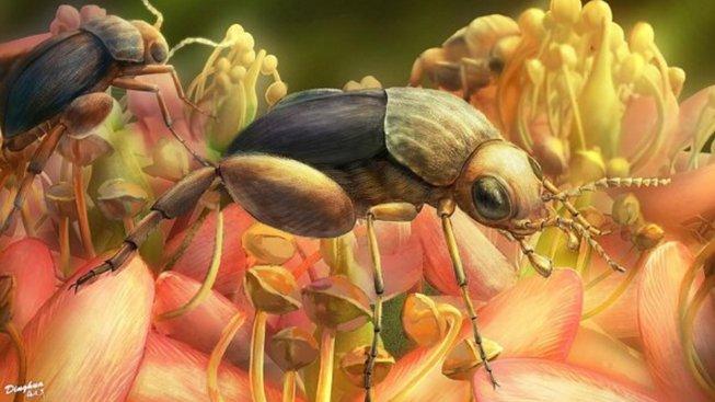 Kresba brouka, který už před sty miliony lety rošiřoval pyl z kvetoucích rostlin