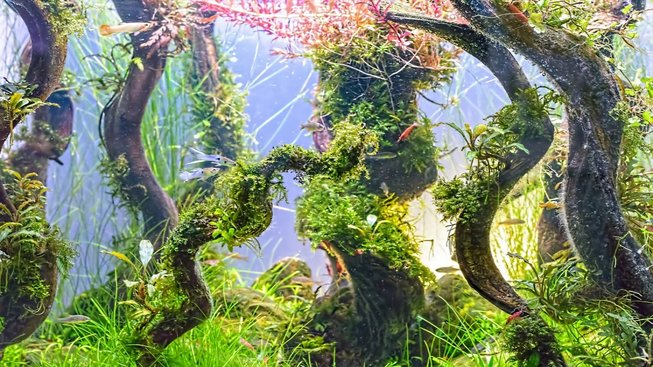 Úchvatný svět rostlin pod hladinou