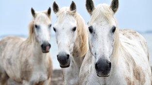 Mytičtí koně