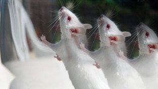 Už jste viděli v deliriu bílé myšky?