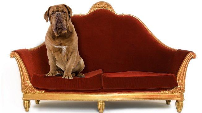 profimedia-0295104210 pes bez cvokaře u