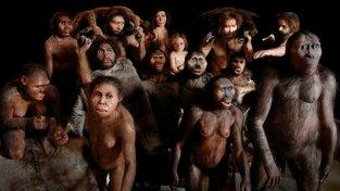Antropologické modely ukazující evoluční strom člověka. Zleva doprava jsou: Žena Homo habilis, Homo ergaster, Homo georgicus (žena vrhající kámen), dva neandrtálci nesoucí ulovené zvíře s ženou a dítětem, kromaňonský lovec s oštěpem, skupina tří hlav – Australopithecus africanus, Paranthropus boisei, Sahelanthropus tchadensis