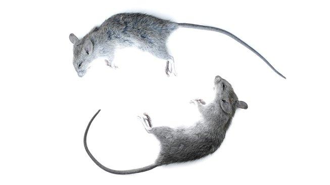 profimedia-0401279808 myš v beztíži