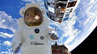 Myši prošlapávají, nebo spíš prohlodávají, cestu na Mars
