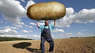 S takovými bramborami v Česku raději nepočítejte. Brambora je náchylná na klimatické změny, vyžaduje vyšší vzdušnou vlhkost