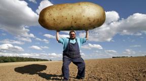 profimedia-0041211665 potato upr