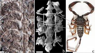 Zkamenělina praštíra Parioscorpio venator, ze kterého vědci vymodelovali pozoruhodného tvora