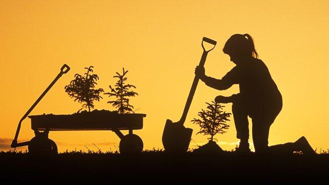 Sázejte stromy. Ne však bezhlavě