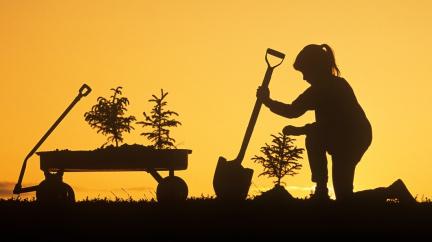 Stromy nám slouží, pohlcují uhlík. Mohou nás ale připravit o vodu