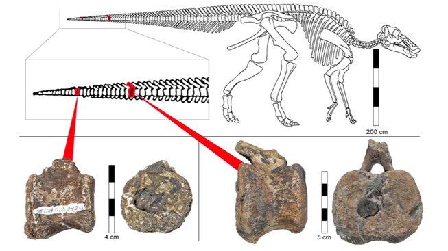 Snímek obrazovky (158) hadrosaurus