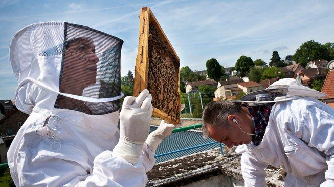 profimedia-0208492234 včelí úl hive frame