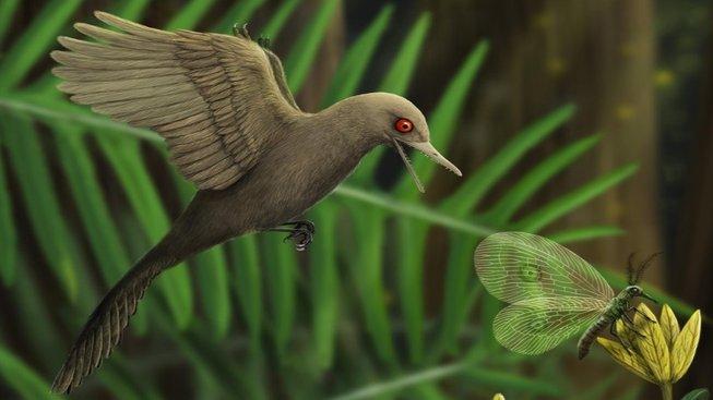 Létající dinosaurus Oculudentavis khaungraae na lovu hmyzu