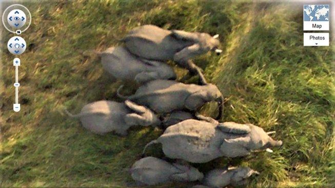 GOOGLE EARTH ELEPHANTS