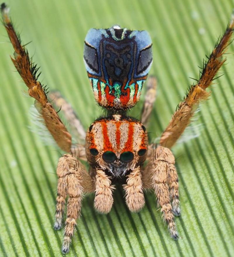Elegáni mezi pavouky
