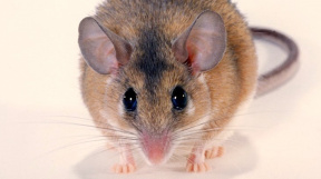 profimedia-0245520518 mouse