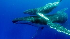 profimedia-0330963334 humpback