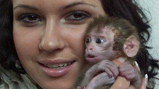 Mládě makaka. Studiem mozku toho druhu dospěli neurovědci k závěru, že kořeny lidské řeči  jsou staré 25 milionů let