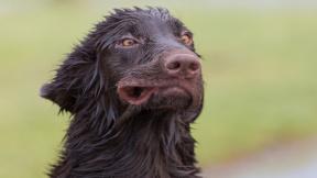 profimedia-0234196181 pubertal dog