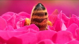 Flavonoidy jsou v širším slova smyslu rostlinné pigmenty. Způsobují zbarvení květů, které přitahuje opylovače... a taky prospívají lidskému zdraví
