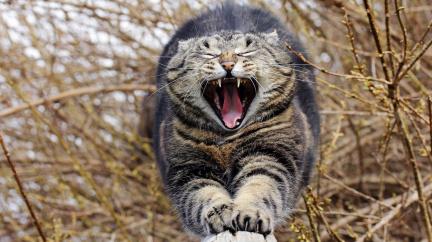 Kočky jsou zabijáci. Raději je nepouštějte ven
