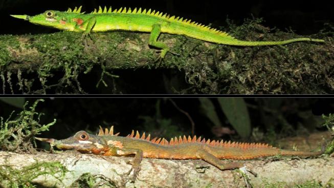 060320_dr_dragon-lizard_inline1_680