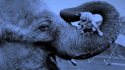 Zvířata se v budoucnu změní, sloni budou velcí jako psi