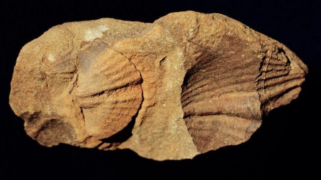 profimedia-0102208651 fossil