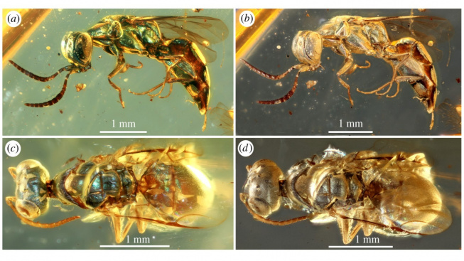 Hmyzí jedinci, kteří žili s dinosaury