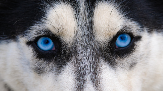 profimedia-0528692861 wolf