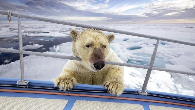 profimedia-0371898614 polar bear