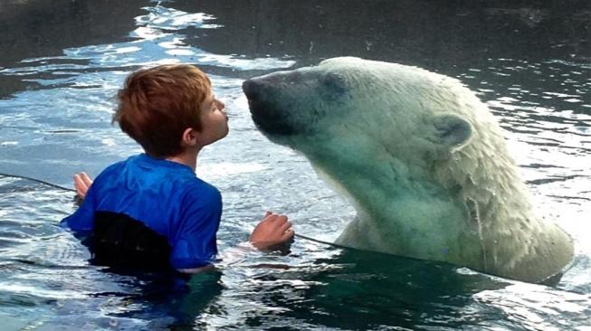 Lední medvědi přežijí jen v zoologických zahradách. Snímek je ze zoo v Torontu. Chlapec není v ohrožení, od šelmy ho dělí tlusté sklo.