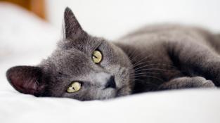 Postel je z pohledu kočky domácí (Felis catus) nejlepší lidský vynález