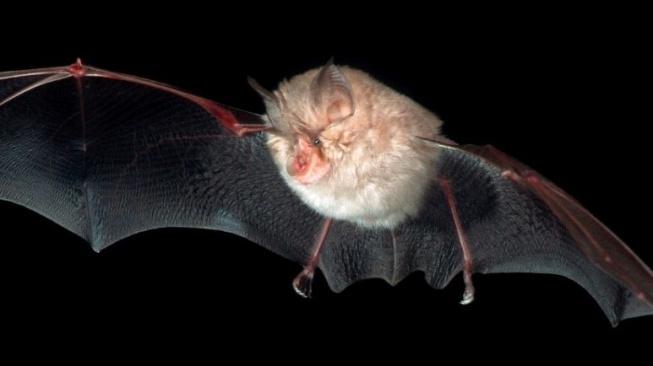 bat upr